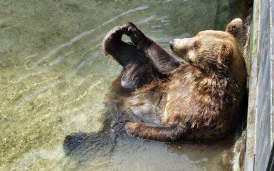 Tierparks in Oberösterreich