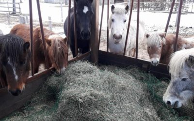 Ponyhof KlipKlap