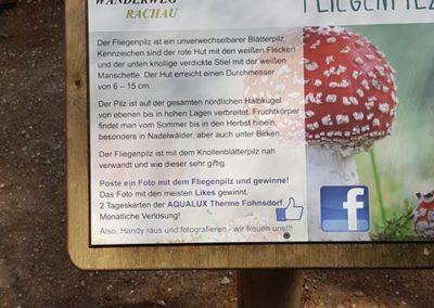 Wipfelwanderweg Rachau (8)