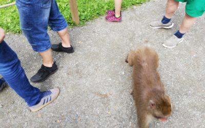 Der Affenberg in Landskron