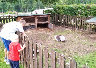 Tiere streicheln bei der Polsterlucken Runde um den Schiedeweiher. Das Polsterstüberl lädt zum Verweihlen ein.