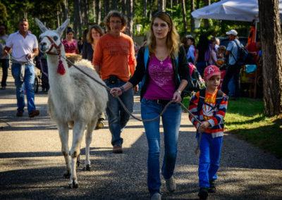Lamas, Esel und viele, viele weitere Tierchen können im Erlebnispark Gänserndorf in Niederösterreich bestaunt werden.