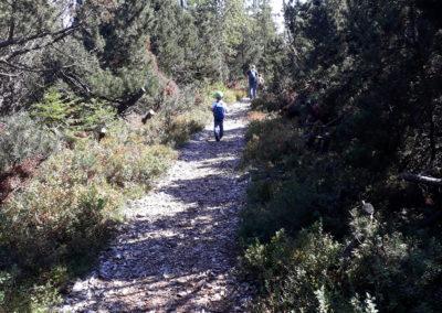 Über Stock und über Stein zum Tanner Moor in Oberösterreich.