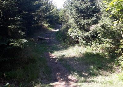 Die Wanderung zum Tanner Moor ist perfekt für Kinder und Familien.