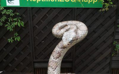 Reptilienzoo in Kärnten