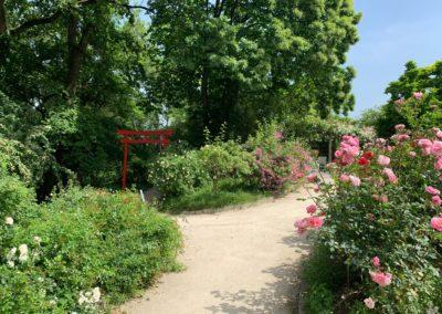 Ein toller Spazierweg ist der Botanische Garten