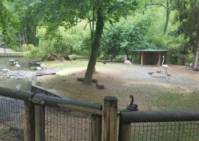 Der Tierpark Haag ist ein beliebtes Ausflugsziel in Niederösterreich