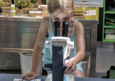 Mikroskop anschauen im Unterwasserreich.