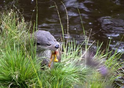 Auch Otter findet man im Unterwasserreich in NIederösterreich