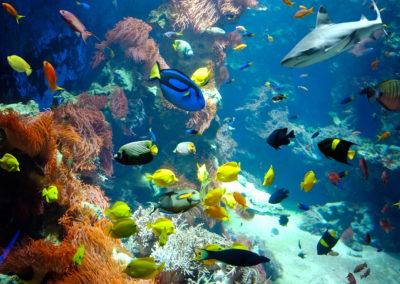 Das Korallenriff im Haus der Natur