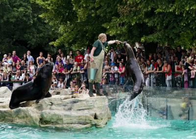 Wer die Möglichkeit hat, unbedingt eine Fütterung im Tiergarten Schönbrunn ansehen