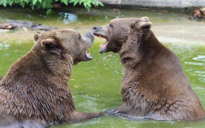 Die Bären an der Weinstraße in der Südsteiermark