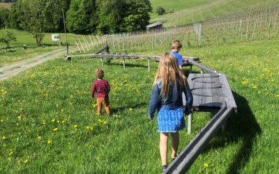 Kugelbahn und Picknick in der Südsteiermark