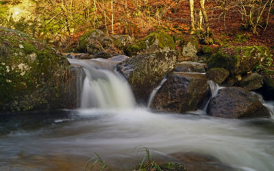 Ausflug in das Pesenbachtal