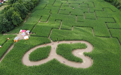Das Maislabyrinth in Kronstorf